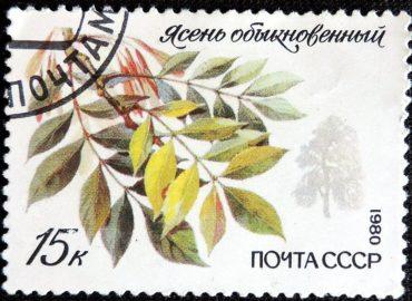 DSCN8863